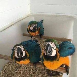 Multi Parrots Species Avian Center Pet Birds On Sale