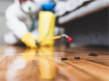 Contact To Our Specialists Cockroach Control in Bradenton.