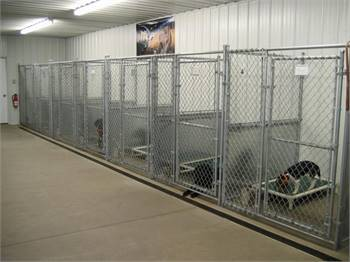 Doggy Daycare services in Tacoma, WA