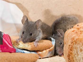 Well-Qualified And Professional Rodent Control in Bradenton, FL.