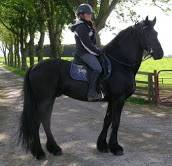 Friesian horses for sale