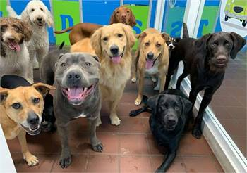 Are you Looking for Best Dog Daycare services in Washington?