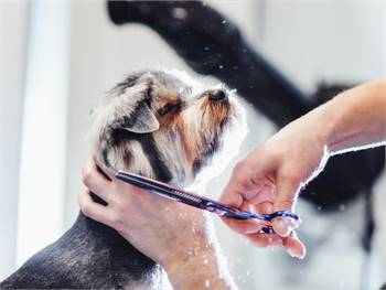 Dog Grooming services in Spanaway