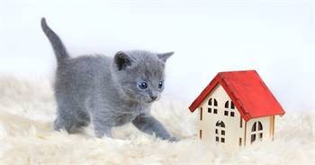 Adorable Russian Blue kittens for sale