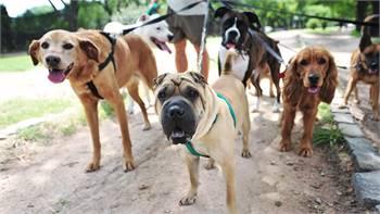 Best Dog Daycare services in Graham, WA