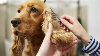 Best Pet Boarding and Grooming services in Puyallup