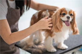 Affordable Dog Grooming with Transport services in Puyallup, WA