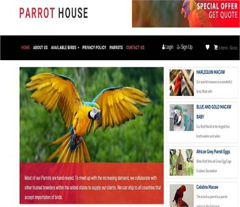 African Grey Parrot | Best place to buy | Get 25% Discount on Parrots parrothouseco
