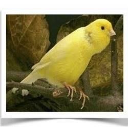 Pet Birds For Sale