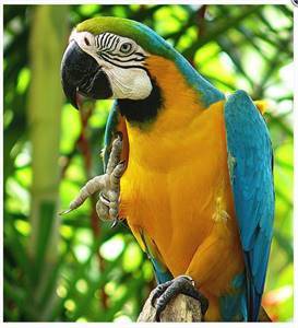 Great Macaw Parrots for Sale