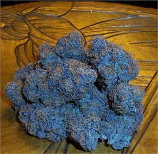 Buy 1 Pound of Blue Dream Online