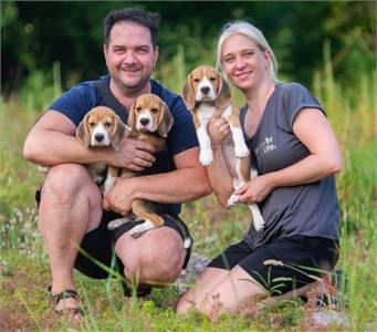 ADORABLE BEAGLE PUPPIES FOR SALE