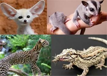 Buy Exotic Pets Online.