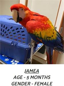How Much is a Scarlet Macaw