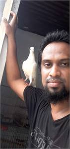 Check my pigeon related Youtube channel